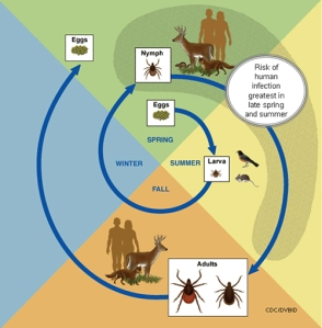 Living With Lyme (Part 2):  Preventing Tick Bites
