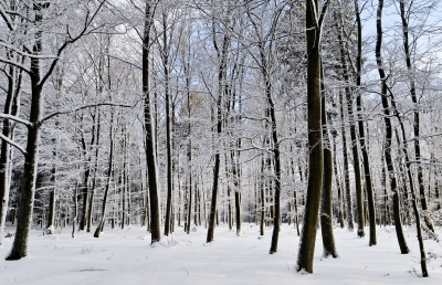 "When you begin to read poetry, you will inevitably be drawn to certain styles of poetry, and authors whose work just ""speaks to"" you.  (Snowy Forest - image courtesy of dan / FreeDigitalPhotos.net)"