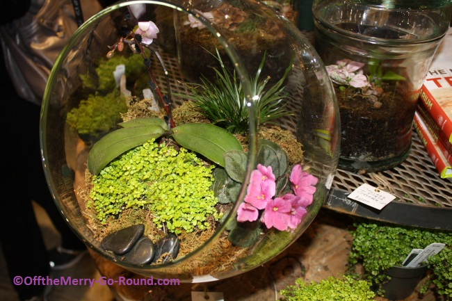 A touch of spring greenery... inside a terrarium!