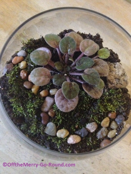 Add moss and decorative touches to the terrarium. Be creative!