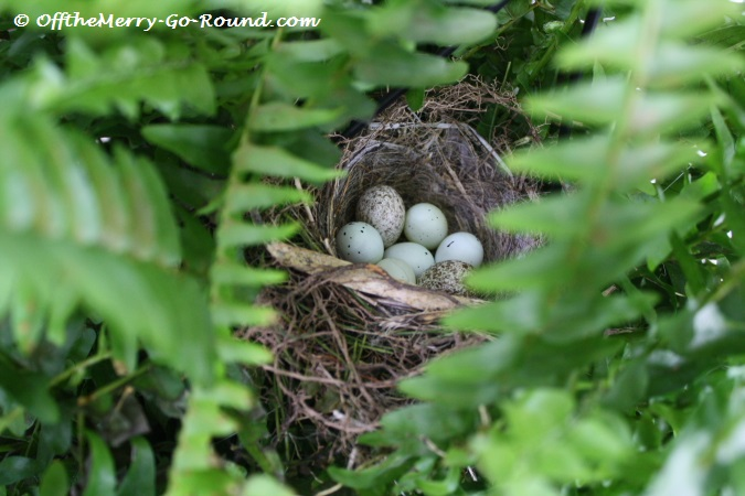 A hidden treasure found inside my hanging fern... I am watering it carefully these days!